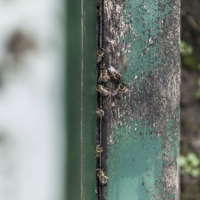 Bijen imker