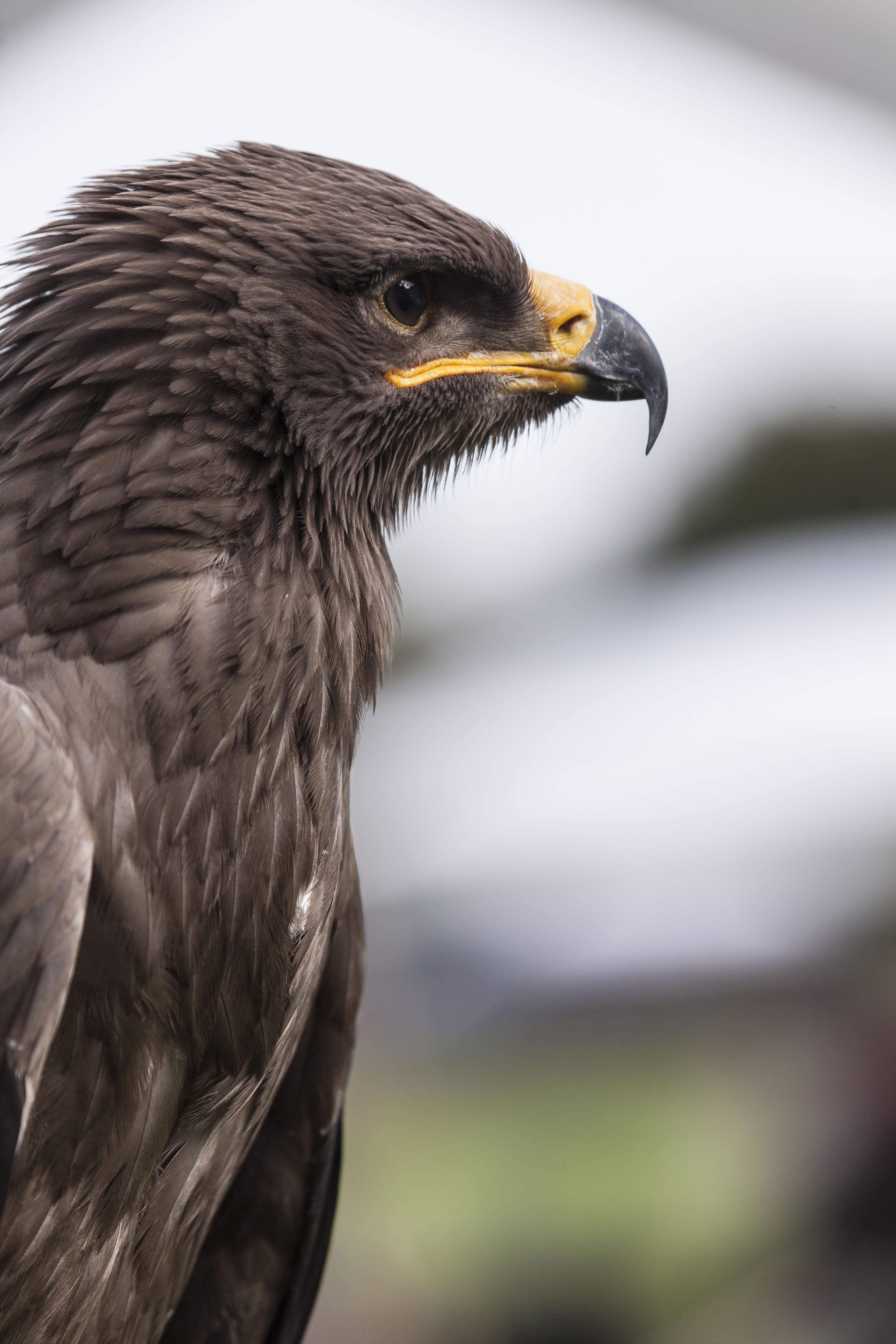 Roofvogels Alden-Biesen